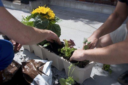Balcony Box, Flower Box, Flowerpot, Flowers Crate