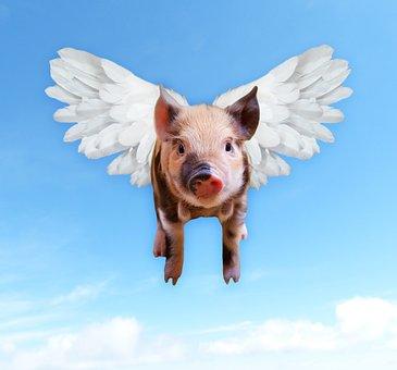 Pigs, Fly, Funny, Hog, Piggy, Wings, Pork, Swine, Hoof