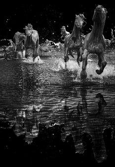 Rushing, Horses, Black And White, Nature, Creative