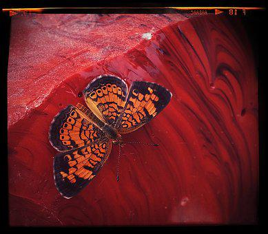 Butterfly, Insect, Hot Springs, Arkansas, Glass Scrap