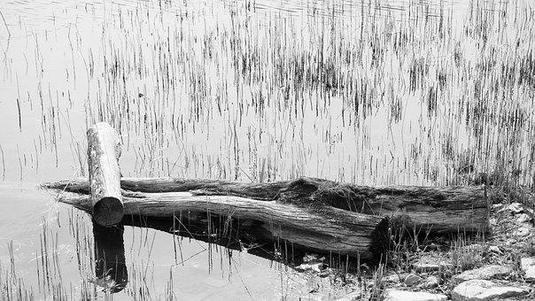 Solitude, Koyo, Desolation, Speculating, I Think