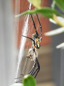 Spider, Web, Nature, Net, Insect, Design, Animal