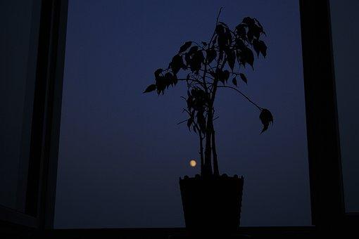 Tree, Plant, Moon, Night, Sky, Pot, Flowerpot, Blue