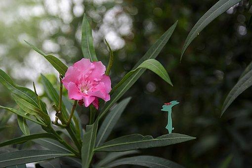 Oleander, Medicinal Plants, Hiv, Plant, Woods, Green