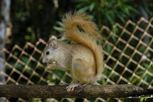 Squirrel, Albino Squirrel, Animal, Rare Animal, Nature