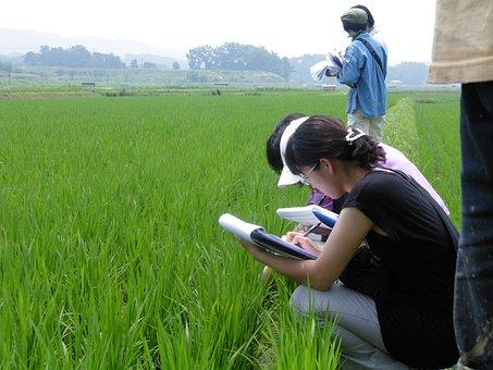 Organic, Screening, Ch, Rice Paddies, Hong Seong