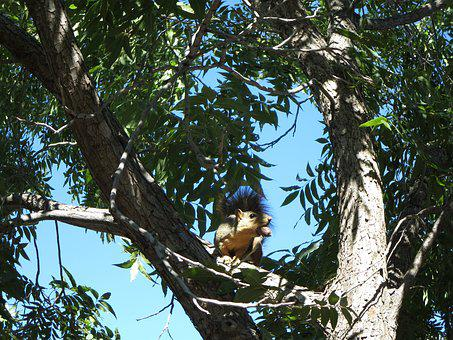 Squirrel, Tree, Pecan, Animal, Mammal, Wild, Outdoor