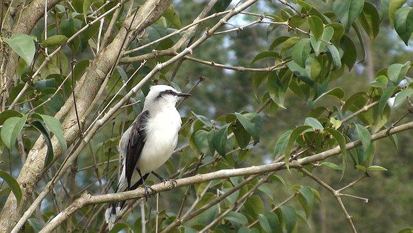 Bird, Tree, Nature, Flying, Tropical Birds