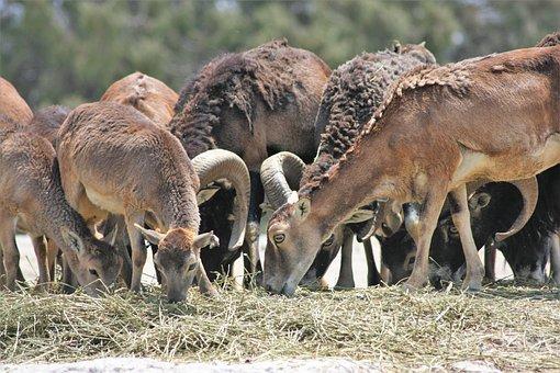 Antelope, Animal, Wild, Africa, Mammal, Safari