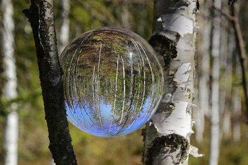 Birch Forest, Glass Ball Photography, White, Mirroring