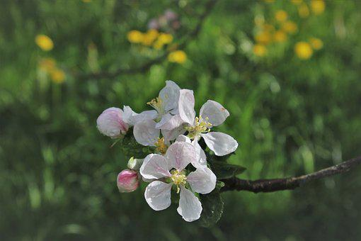 Sprig, Wet, Branch, Sad, Plant, Blooming, The Freshness