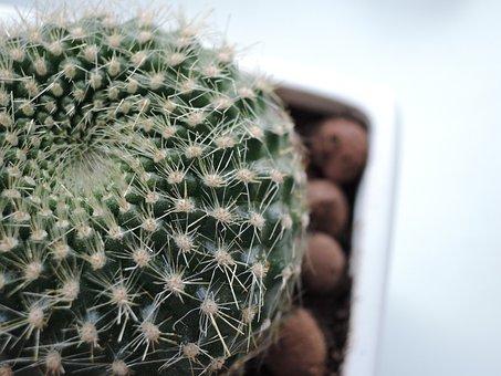 Cactus, Barb, Green, Scratchy, Plant, Needles, Indoor