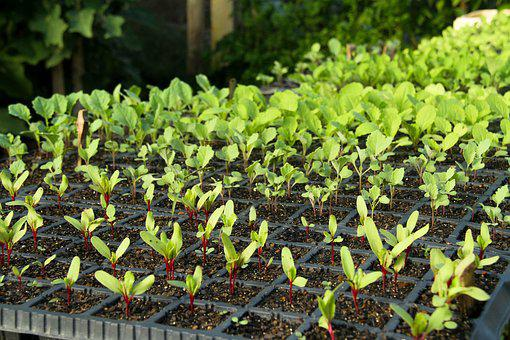 Organic, Verdura, Nature, Natural, Leaf, Environment