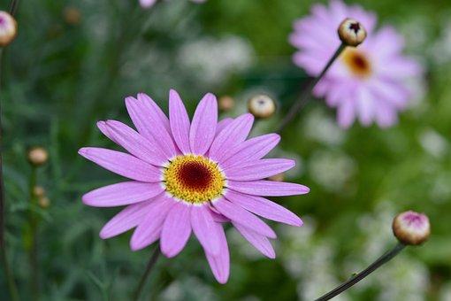 Flowers, Flower, Flower Color Parma, Pistil, Stamens
