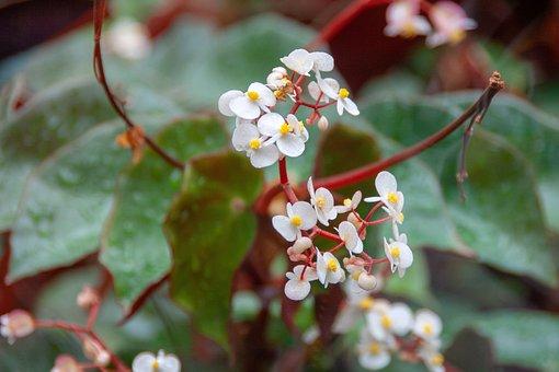 Flower, Detail, Flora, Nature, Leaf, Spring, Plant