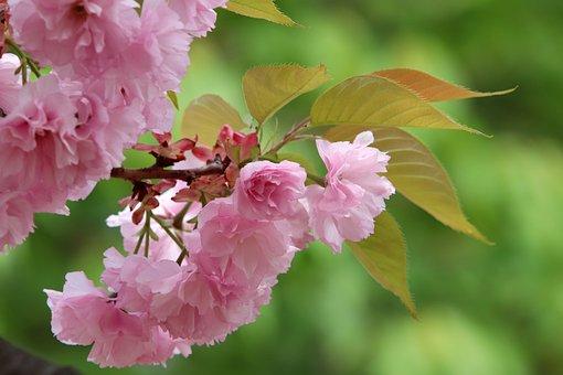 Spring, Spring Flowers, Nature, Flowers, Plants, Season