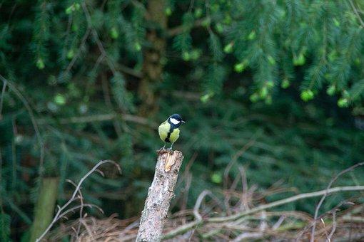 Bird, Wild, Animel, Focus, Vögel, Details, Nature