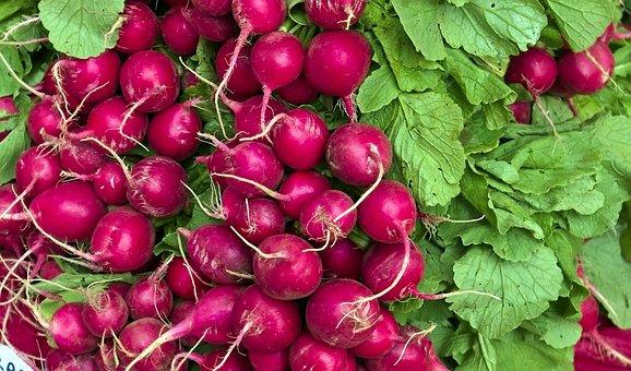 Harvested Radishes, Fresh Radishes, Radishes