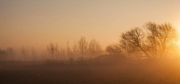 Misty Morning, Sunrise, Sun Through Trees, Fog
