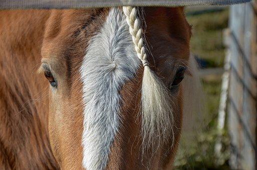 Horse, Head, Nature, Horse Head, Eye, Eyes
