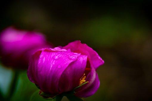 Flowers, Flora, Nature, Water, Rain, Drops, Color