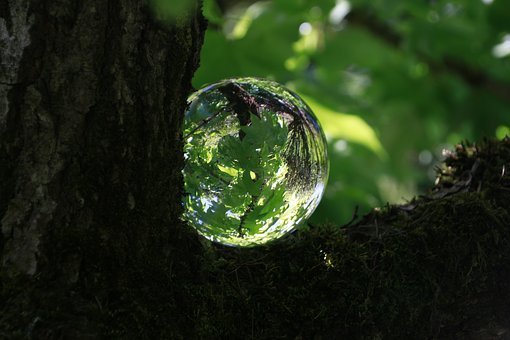 Tree, Green, Glass Ball, Nature, Leaves, Forest, Spring