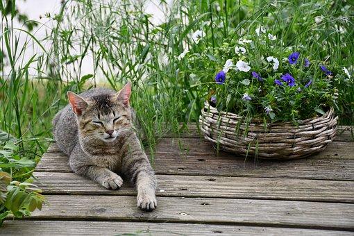 Cat, Flowers, Pet, Cute, Sleep