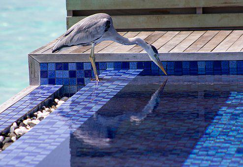 Heron, Pool, Sea, Blue, Waterbird, Wild, Nature