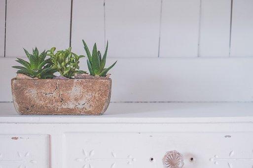 Room, Flower, White, Cabinet, Plant, Vase, Table
