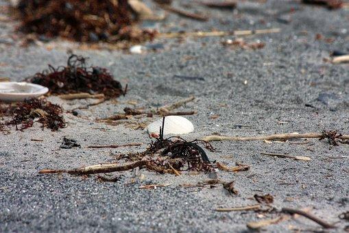 Shell, Sea, Beach, Ocean, Sand, Seaside, Seashell
