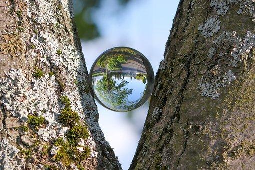 Log, Bark, Ball, Glass Ball, Split, Fork, Mirroring