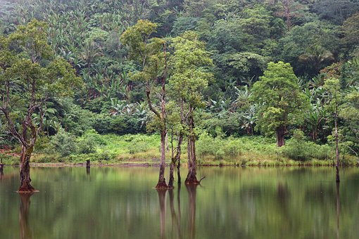 Landscape Jungle, Vacation, Travel, Tropical, Green