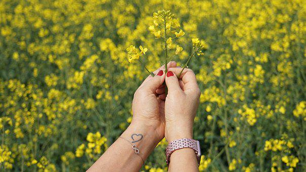 Hands, Woman, Flowers, Oilseed Rape, Field Of Rapeseeds