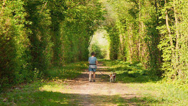 Walking In The Forest, Dogs With Woman, Woman, Dogs
