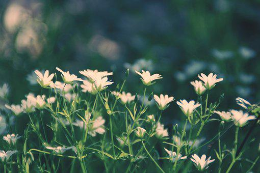 Wood Anemone, Forest, Forest Floor, Flower, Nature