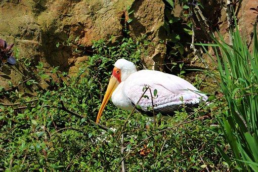Stork, Bird, Beak, Yellow, Feathers, White, Black, Zoo