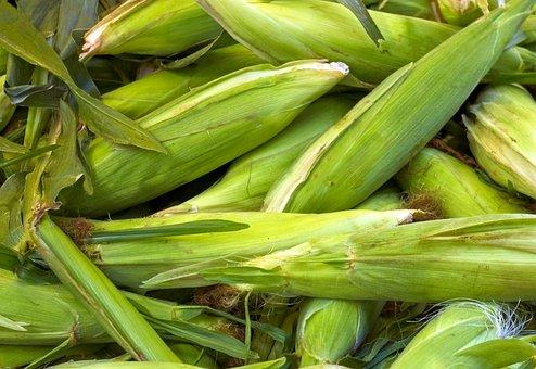 Fresh Farm Market Corn, Cob, Corn, Food, Yellow