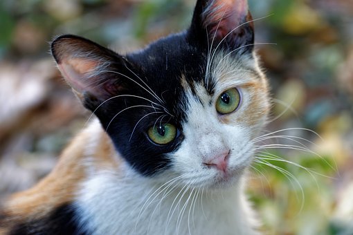 Cat, Almost, Animals, Pet, Eyes, Cute, Head, Front