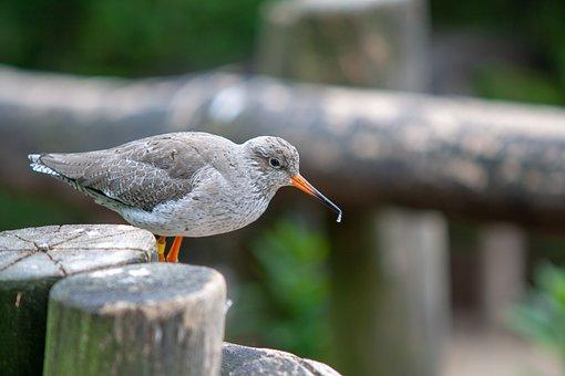 Bird, Focus, Details, Wonder, Natur, Animel, Wild