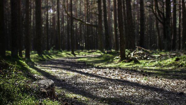 Path, Forest, Sunrays, Sunbeams, Sun Light, Way, Nature