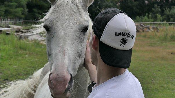 Horse, Gelding, Stallion, Stud, I Love Horses