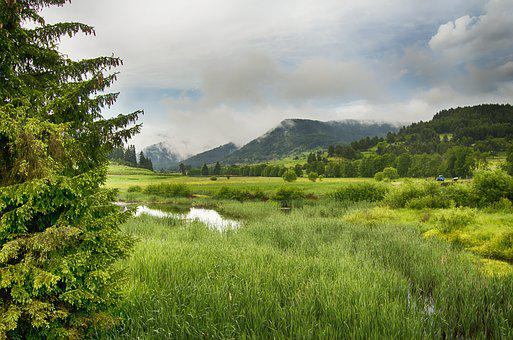 Meadow, Wetland, Swamp, Nature, Grass, Green, Stormy