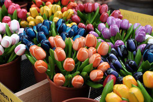 Collections, Amsterdam, Tulip, Tourism, House