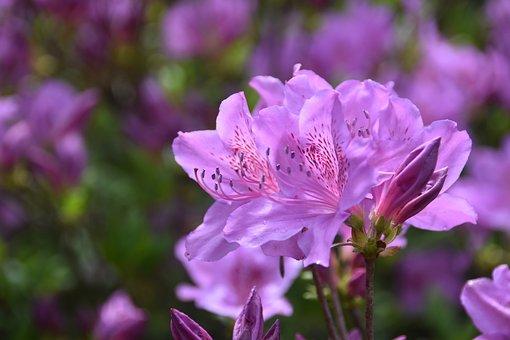 Pink, Flowers, Blossom, Wildflower, Beautiful, Macro