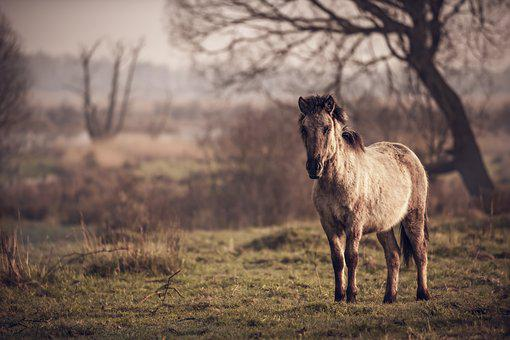 Horse, Pasture Land, Pony, Ride
