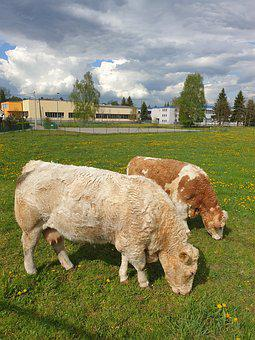 Cows, Pasture, Brown, Meadow, Pets, Cattle, Nature