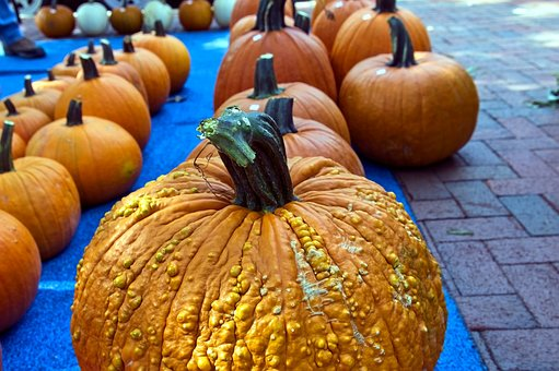 Farm Fresh Pumpkins, Pumpkins, Harvest, Autumn