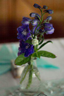 Close Up, Flowers, Macro, Purple, Blue, Nature, Plant