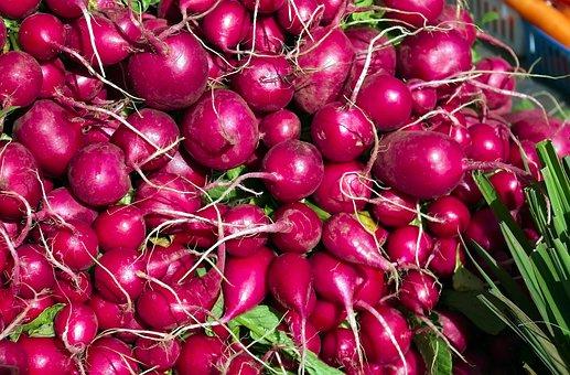 Fresh Radishes, Radishes, Vegetables, Food, Harvest