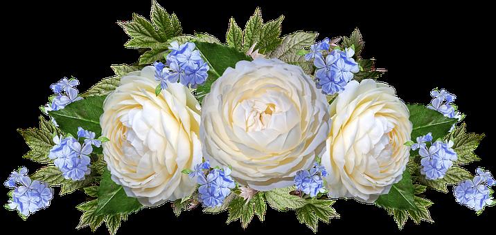 Roses, Flowers, Plumbago, Arrangement, Garden, Nature